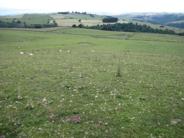 Musden Low Hillside towards Musden Wood
