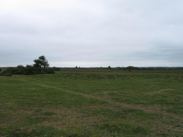 Bagshot Moor, East Boldre