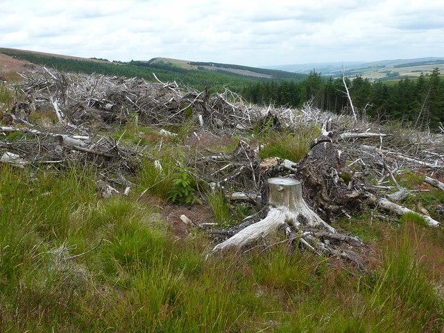 Old felled forestry