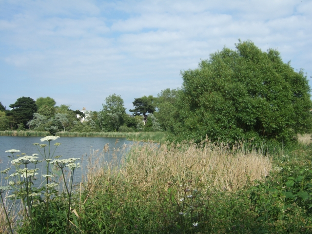 In the RSPB reserve at Radipole Lake