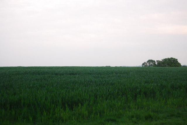 Wheat field near Charcott