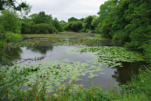 Lake in Riverside Garden Park