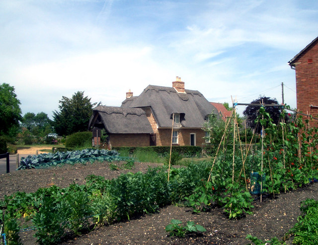 Thatch and Beans, Over
