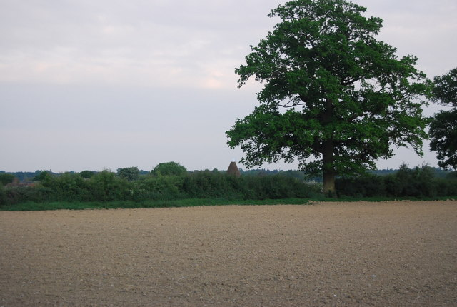 Tree by a hedge near Charcott oast