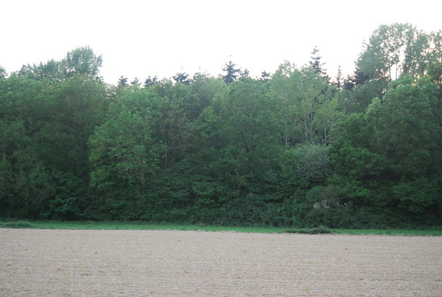 Gasson's Wood