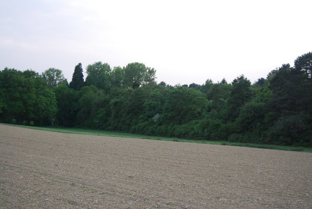 Gasson's Wood across a ploughed field