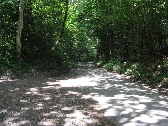 Dappled sunlight on Steep Road as it passes through Marlpits Wood