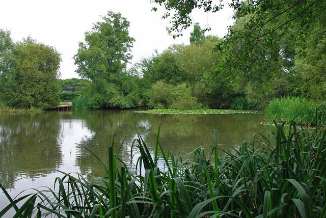 Pond by Horleyland Wood