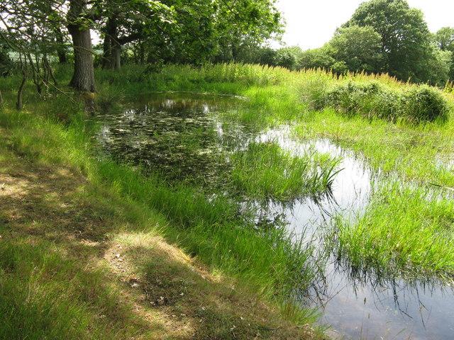 Hillside pond by path to Huggett's Furnace
