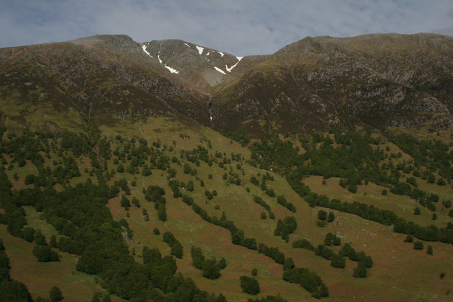 Glen side woodland