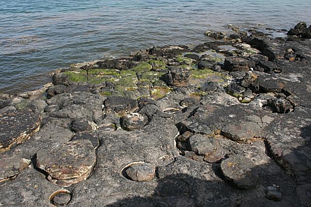 Still More Mushroom Rocks