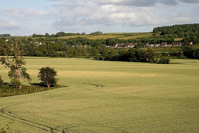 Wheat fields at Gattonside
