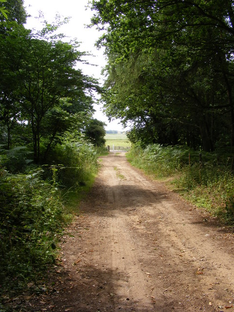 Farm Track through Wadding Wood