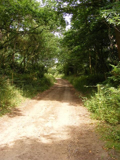 Farm Track through Wadding Wood