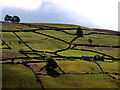 SD9897 : Hillside Swaledale Fields from Feetham : Week 27