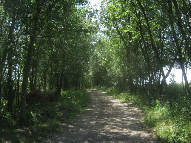 Bridleway to Beeches Farm