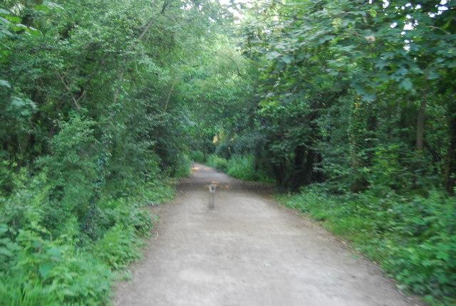 Cycleway or Footpath?