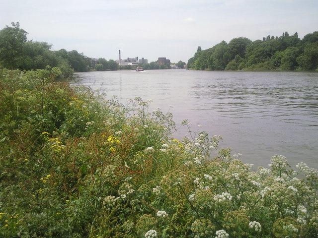Summer river scene at Mortlake