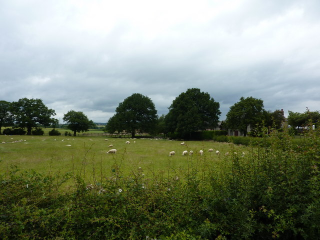 Sheep grazing near Moor Farm