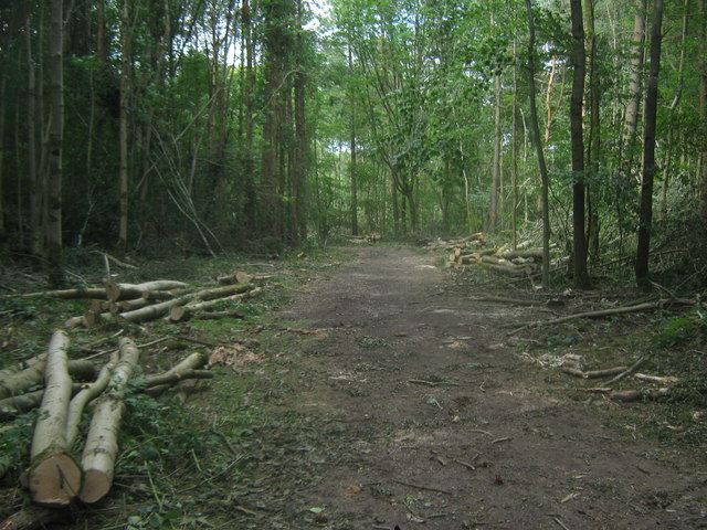 Bridleway in Jules Wood and coppiced logs