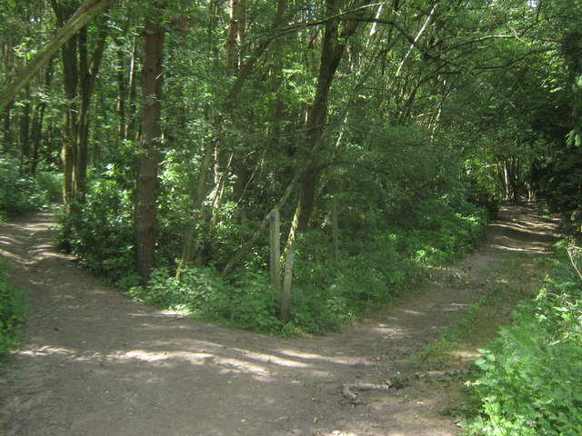 Bridleway junction on Sussex Border Path in Jules Wood (2)