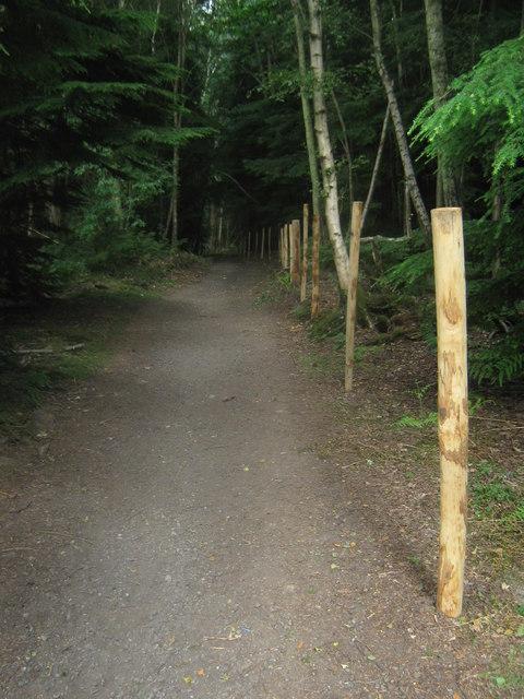 New posts on a bridleway to Greybury Farm