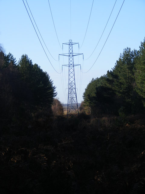 Power Lines in Waveney Forest