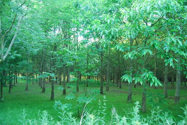 Plantation near the GSK works