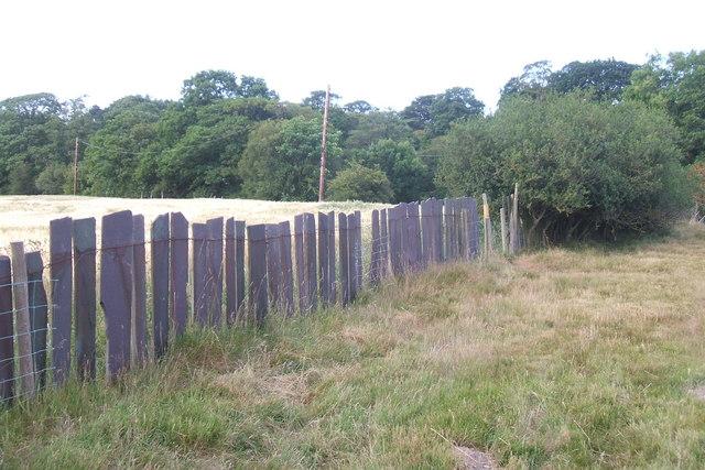 Slate fence on the Elwy floodplain