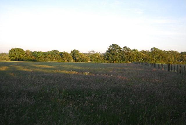 Meadows near Powder Mills in the setting sun