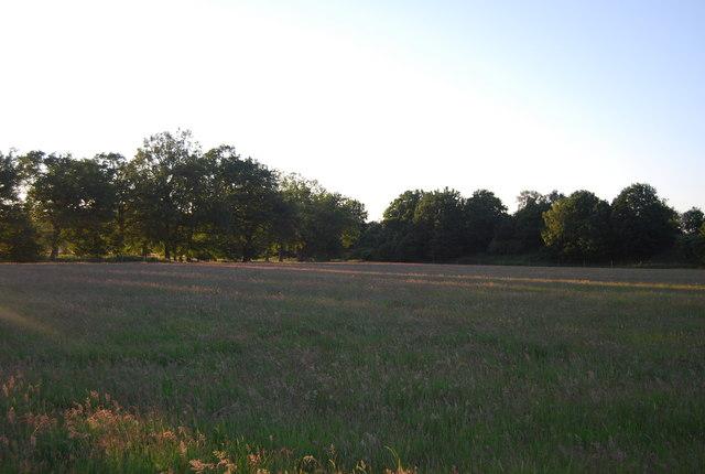 Grassy meadow near Powder Mills
