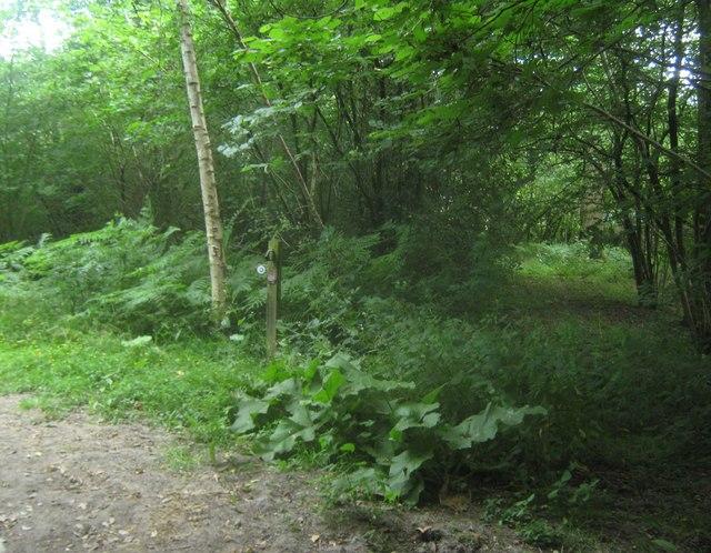 Bridleway diversion near Leighton Manor