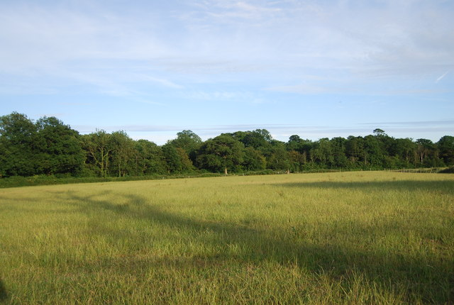 Grassland by Hale Oak Rd