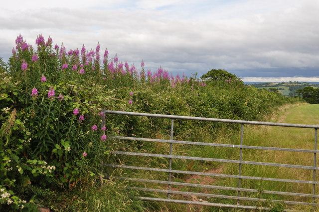 Mid Devon : Hedgerow & Gate