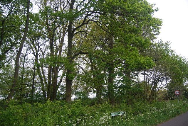 Woodland by Treemans Rd