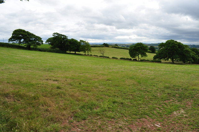 Mid Devon : Countryside & Grassy Field