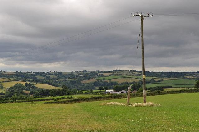Mid Devon : Grassy Field & Telegraph Pole