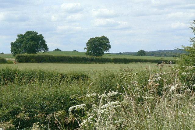 Fields alongside the A60