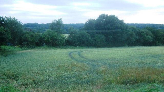 View near Ramslye Cottage