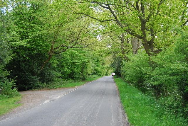 Lane across Lane End Common