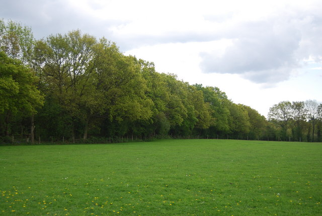 Woodland edge, Fletching Common