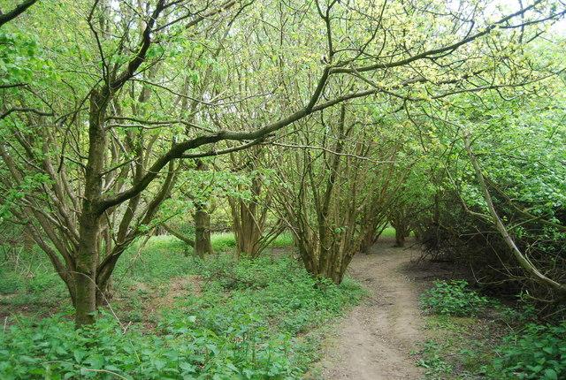 Footpath across Fletching Common