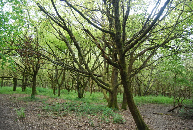 Woodland, Fletching Common
