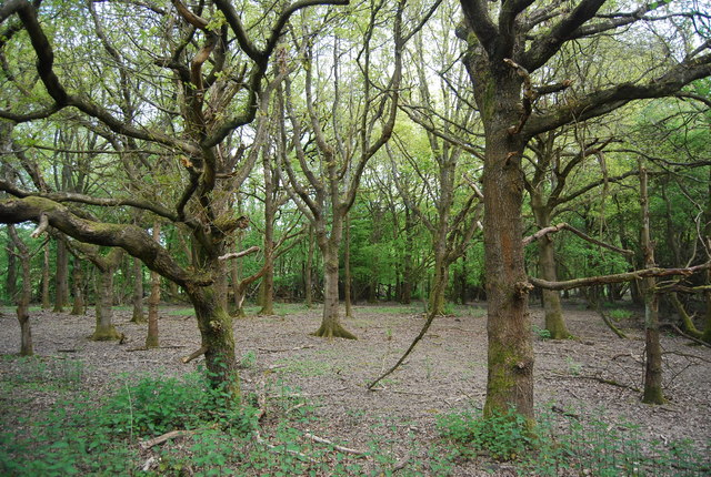 Open Deciduous Woodland, Fletching Common