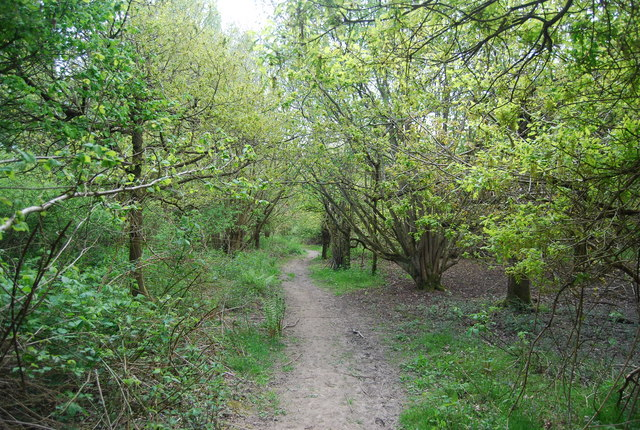Footpath across Fletching Common