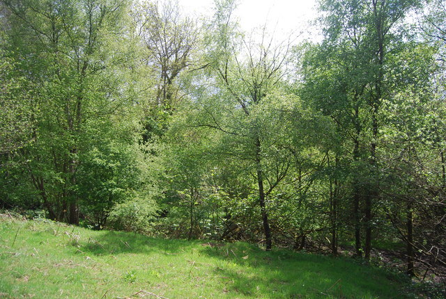 Woodland between Jackies Lane and Newick Hill