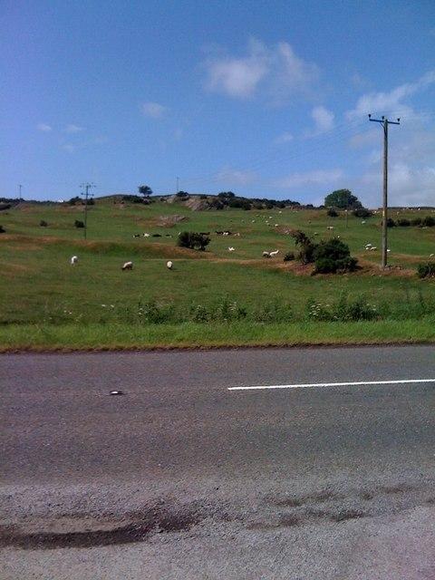 Field of sheep near Kippford