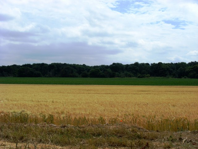 Arable land near Tuddenham