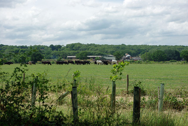 Cattle, Charlwood Place