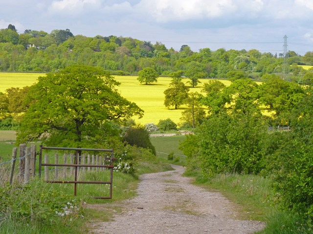 Fields at Edgwarebury